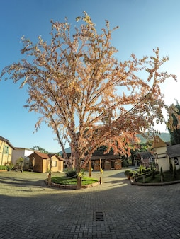 Pomerode-osterbaum in santa catarina