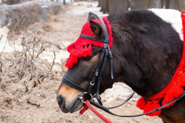 Pony im winterpark