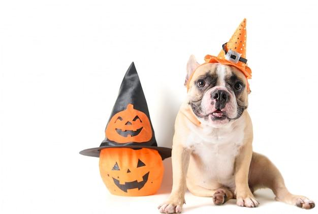Porträt der französischen bulldogge mit hut halloween und lächeln