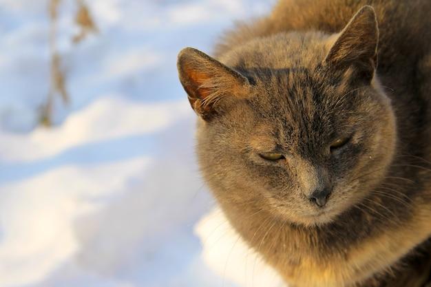 Porträt der grauen katze gegen weißen schnee