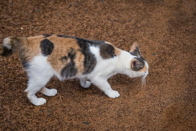 Porträt der katze den boden liegend und riechend