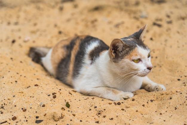 Porträt der katze weit weg liegend und auf dem sand schauend