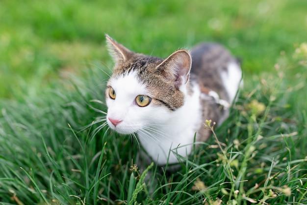 Porträt der netten katze, die im gras im freien geht
