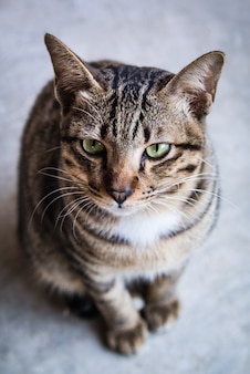 Porträt der netten lustigen katze, die in der front sitzt