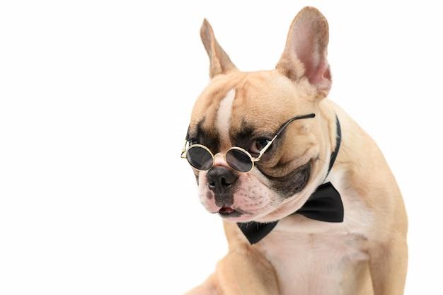 Porträt der niedlichen braunen französischen bulldogge tragen sonnenbrille