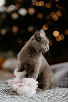 Porträt der niedlichen britischen katze mit babysocken im winter
