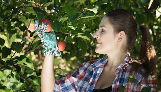 Porträt der schönen lächelnden frau im garten, der äpfel betrachtet
