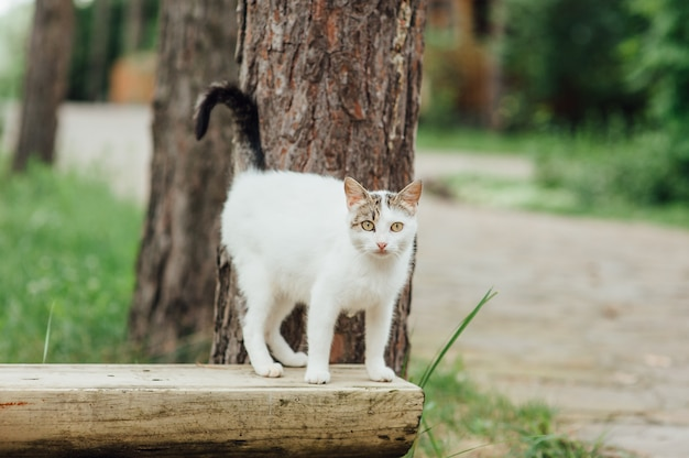 Porträt der schwangeren katze, die auf der bank geht