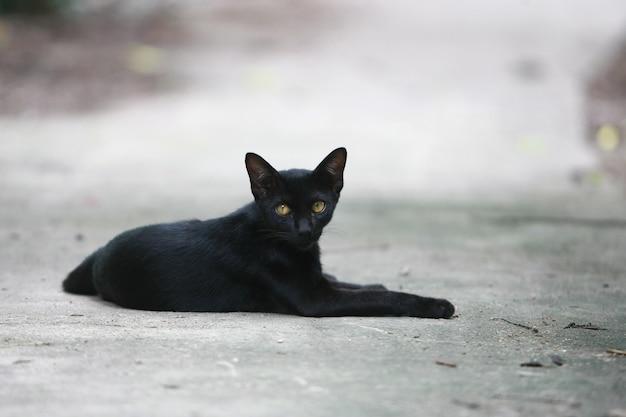 Porträt der schwarzen katze auf der straße
