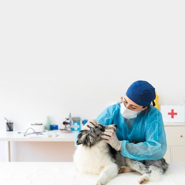 Porträt der tierärztlichen frau den hund in der klinik überprüfend