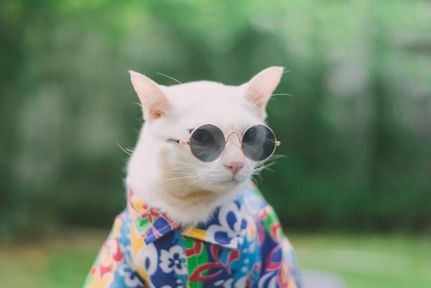 Porträt der tragenden sonnenbrille und des hemdes der hippie-weißen katze, tiermodekonzept.
