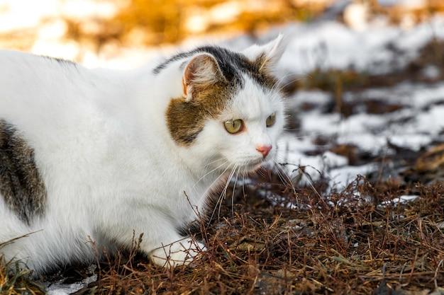 Porträt der weißen gefleckten katze auf schmelzendem schneehintergrund