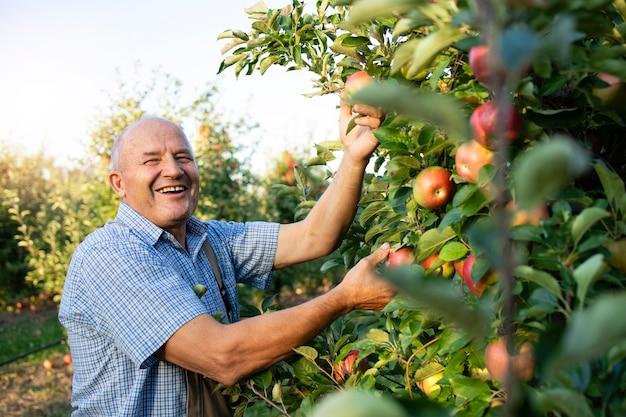 Porträt des älteren bauern, der im apfelobstgarten arbeitet