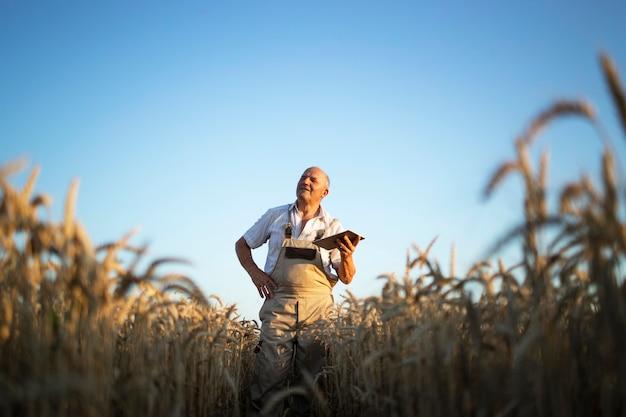 Porträt des älteren landwirt-agronomen im weizenfeld, der ernten vor der ernte prüft und tablet-computer hält