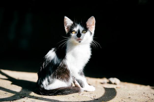 Porträt des armen und kranken obdachlosen kätzchens
