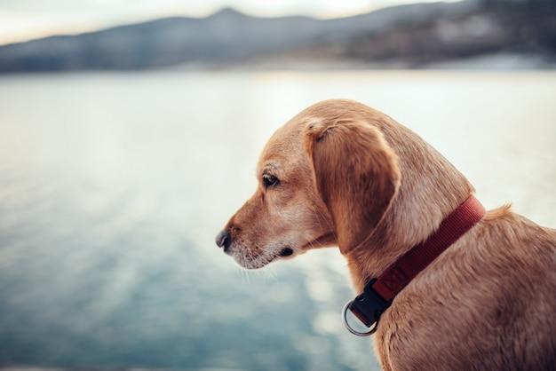Porträt des braunen hundes sitzend durch das meer