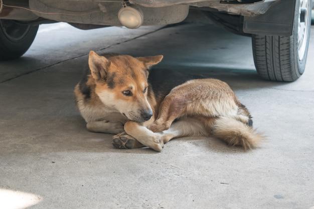 Porträt des braunen jungen hundes, der auf dem boden liegt