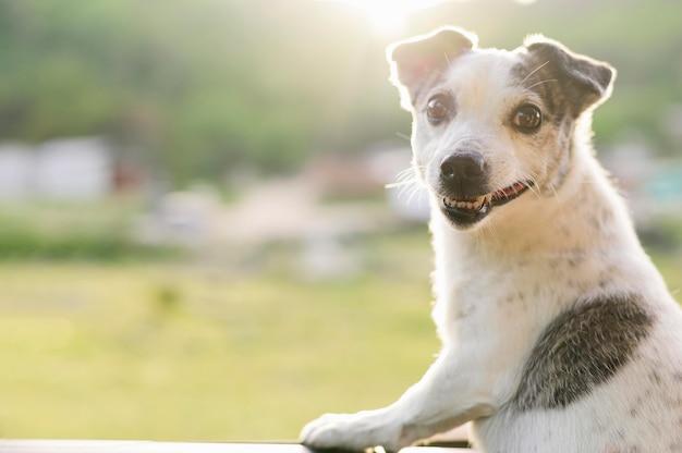 Porträt des entzückenden hundes, der natur genießt