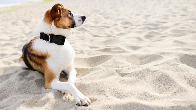 Porträt des entzückenden hundes, der zeit im freien genießt