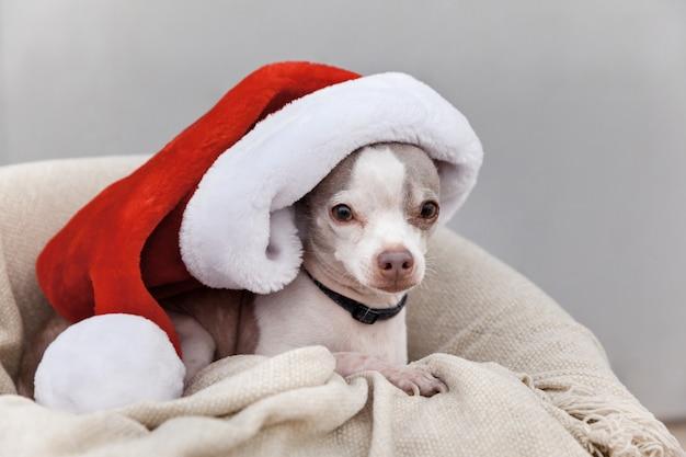 Porträt des entzückenden hundetragenden weihnachtshutes