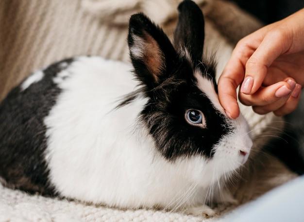 Porträt des entzückenden kaninchens