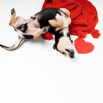 Porträt des entzückenden kleinen hundes, der spielt