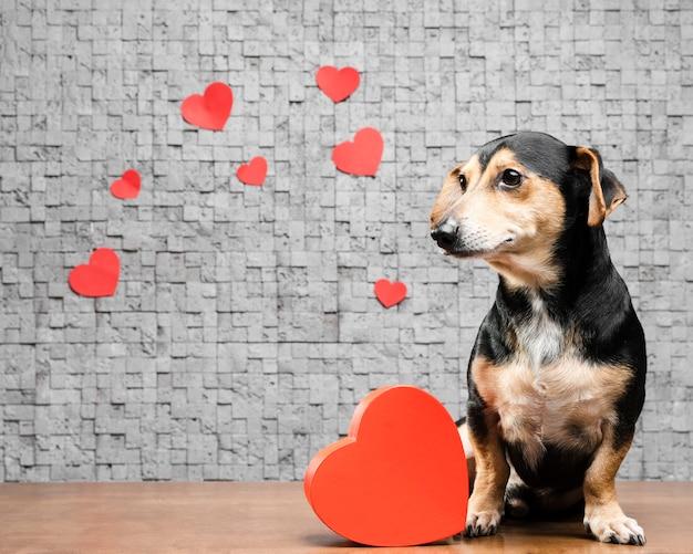 Porträt des entzückenden kleinen hundes mit herzen