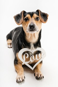 Porträt des entzückenden kleinen hundes mit liebesanhänger