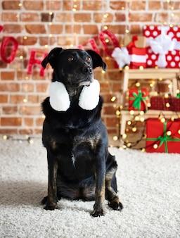 Porträt des fokussierten hundes, der oben schaut
