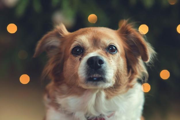 Porträt des glücklichen braunen netten hundes, hauptschuß des lächelnhundes