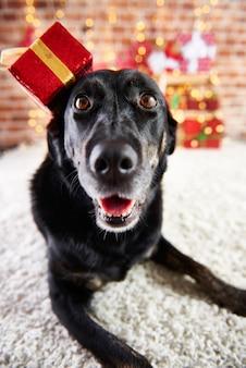Porträt des glücklichen hundes in der weihnachtszeit