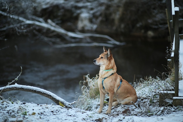 Porträt des glücklichen rothaarigen mischlingshundes, der auf einer winterwiese sitzt