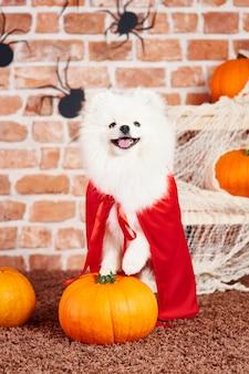 Porträt des hundes mit rotem umhang in der halloween-zeit