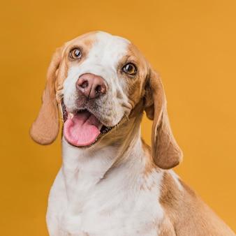 Porträt des hundes seine zunge heraus haftend
