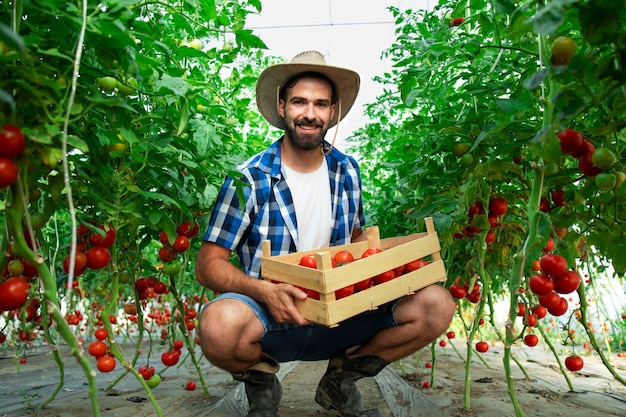 Porträt des jungen lächelnden bauern mit frisch gepflücktem tomatengemüse und im treibhausgarten stehend