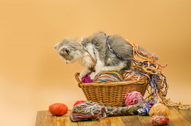 Porträt des kleinen grauen hübschen kätzchens. lustiges kätzchen und stricken