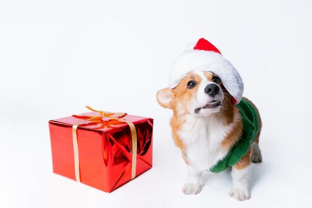 Porträt des kleinen lustigen welpen-corgis in der roten weihnachtsmann-kappe