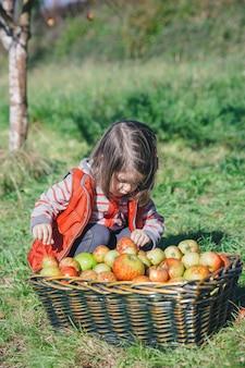 Porträt des kleinen mädchens, das frische organische äpfel in einem weidenkorb mit ernte schaut. natur- und kindheitskonzept.