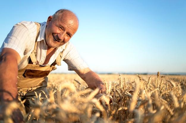Porträt des landwirts des älteren landwirts im weizenfeld, das ernten vor der ernte prüft