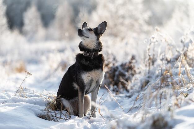 Porträt des mischlingshundes. treue.