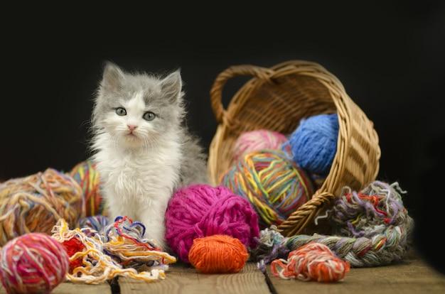 Porträt des netten grauen hübschen kätzchens. lustiges kätzchen und stricken im weidenkorb