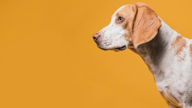 Porträt des netten hundes mit kopienraum