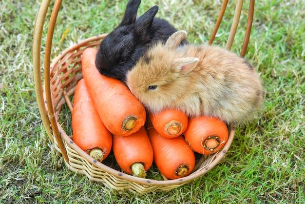 Porträt des netten kaninchens mit karotte auf dem hölzernen korb.