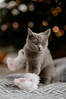 Porträt des niedlichen britischen kätzchens mit babysocken im winter