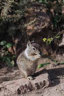 Porträt des niedlichen eichhörnchens