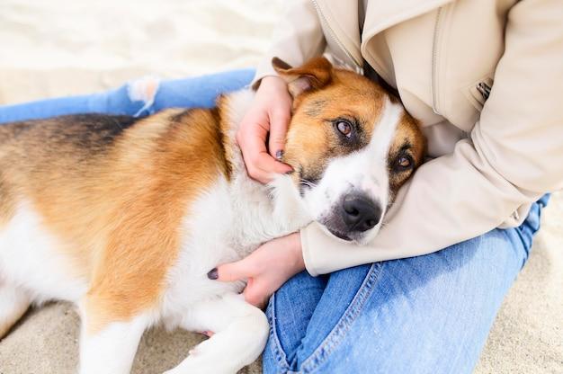 Porträt des niedlichen hundes, der zeit in der natur genießt