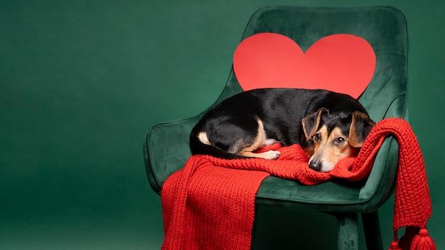 Porträt des niedlichen kleinen hundes, der auf einem stuhl sitzt