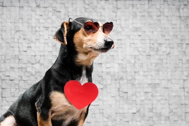 Porträt des niedlichen kleinen hundes mit sonnenbrille