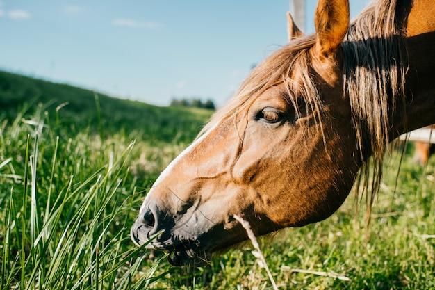 Porträt des pferdes auf der weide im freien an der natur