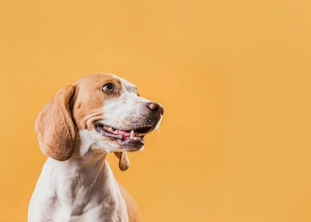 Porträt des reizenden hundes weg schauend